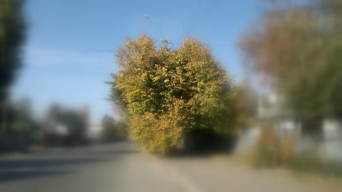 """Житомир провёл нас к выезду на трассу этим природным сердцем. Природный намёк """"лайкнуть"""" Житомир. А почему нет?"""