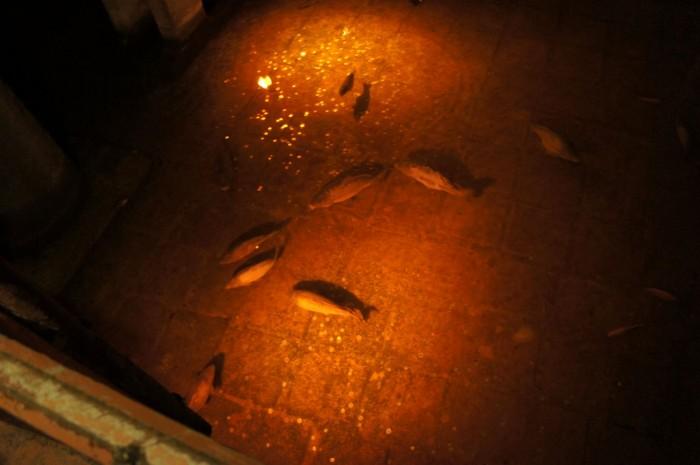 Суровые подземельные рыбы, которые с радостью скушают только что упавшую монетку...